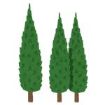庭木の確認